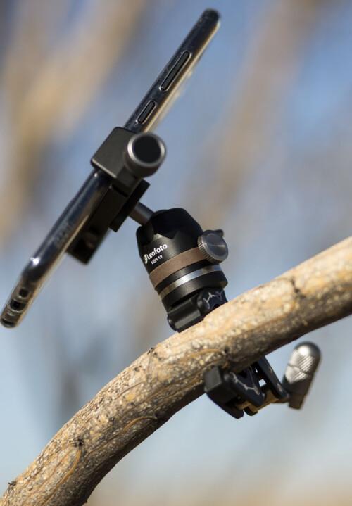 Leofoto MC-30 kit en rama de árbol